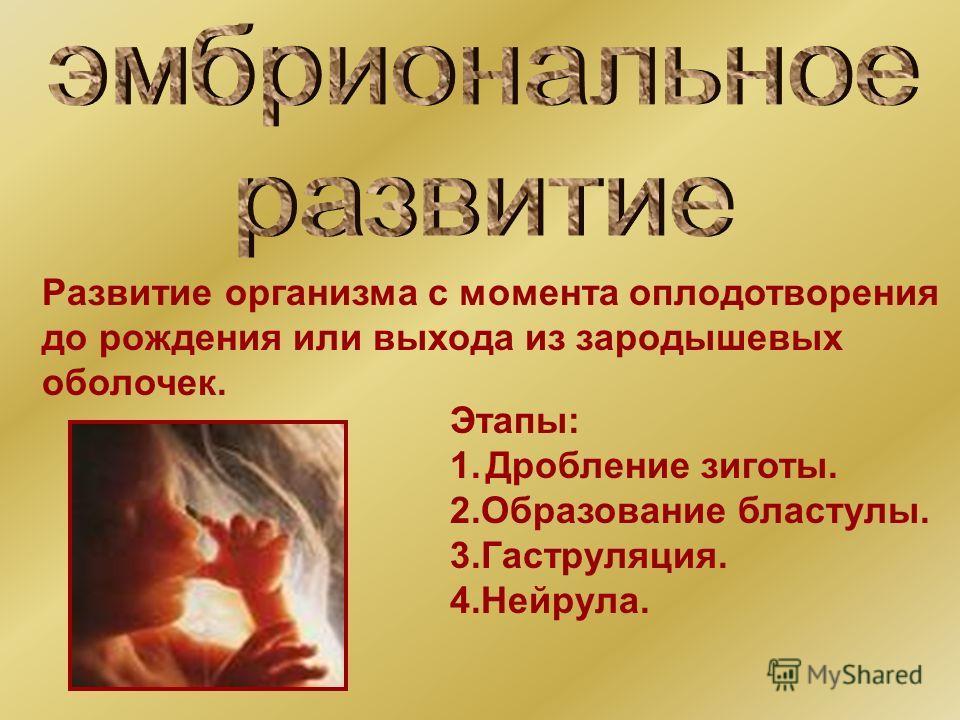 Развитие организма с момента оплодотворения до рождения или выхода из зародышевых оболочек. Этапы: 1.Дробление зиготы. 2.Образование бластулы. 3.Гаструляция. 4.Нейрула.