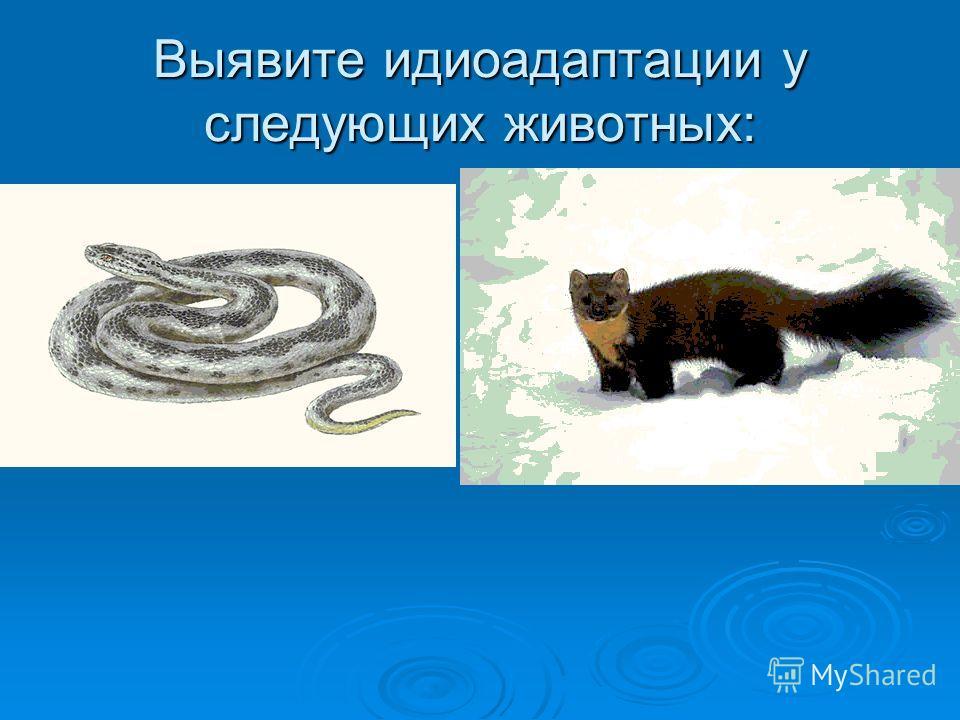 Выявите идиоадаптации у следующих животных: