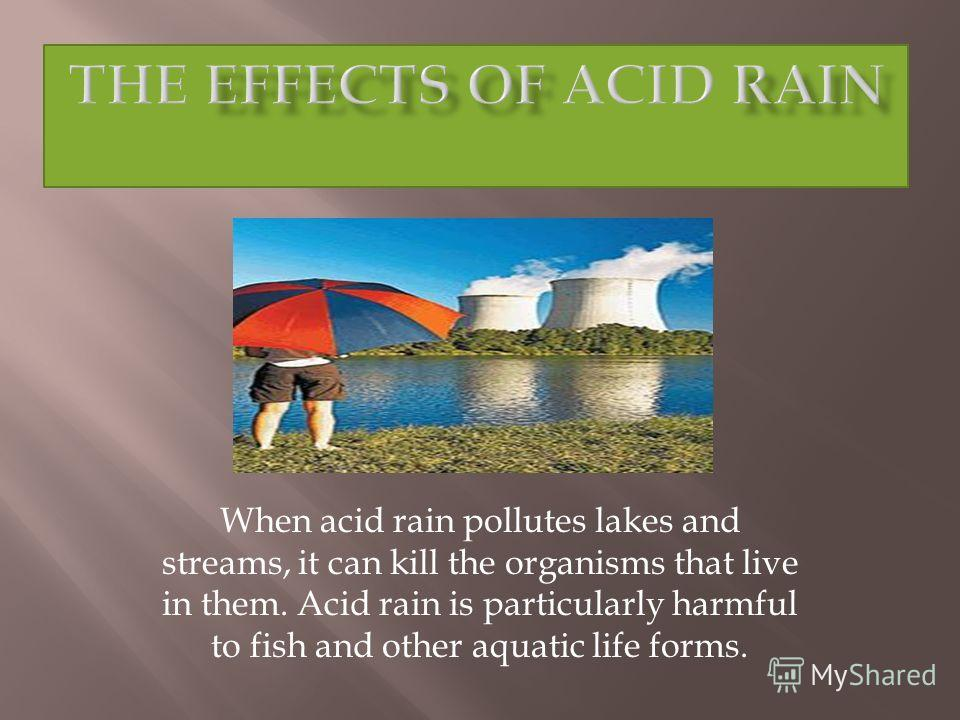 When acid rain pollutes lakes and streams, it can kill the organisms that live in them. Acid rain is particularly harmful to fish and other aquatic life forms.