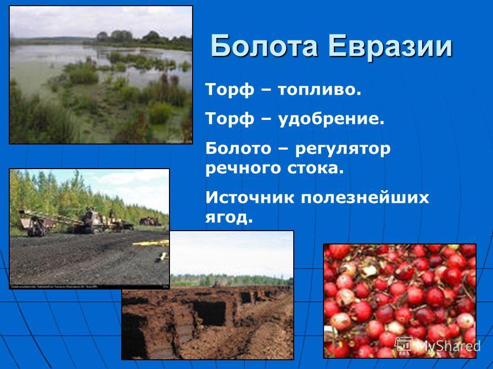 Болота Евразии Торф – топливо. Торф – удобрение. Болото – регулятор речного стока. Источник полезнейших ягод.