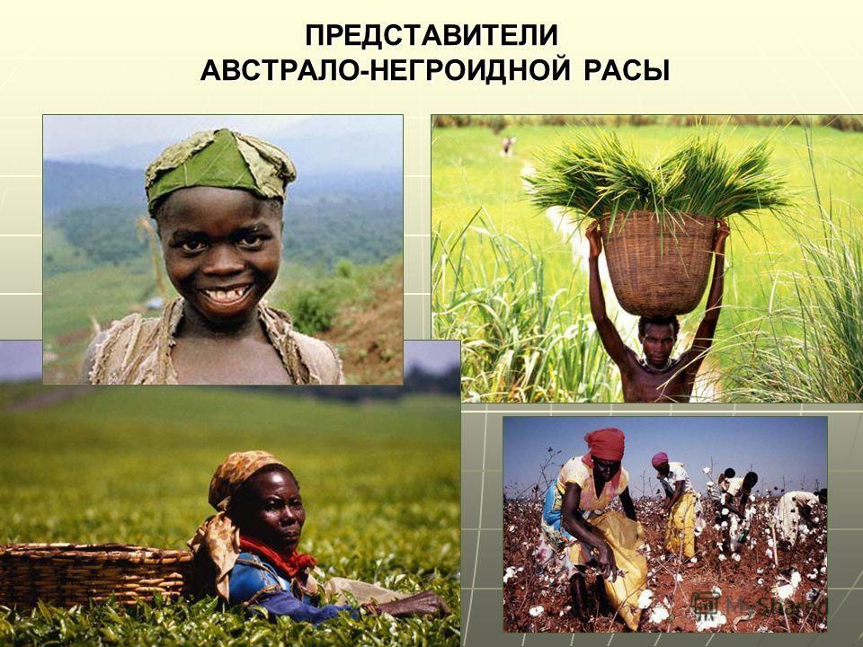ПРЕДСТАВИТЕЛИ АВСТРАЛО-НЕГРОИДНОЙ РАСЫ