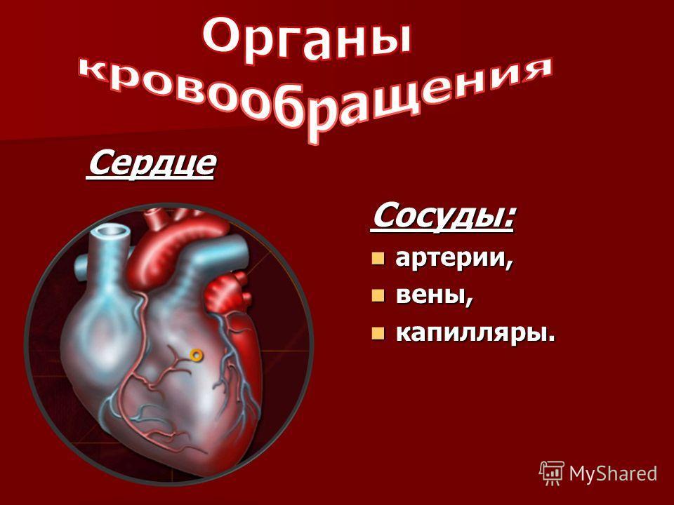 Сердце Сосуды: артерии, артерии, вены, вены, капилляры. капилляры.