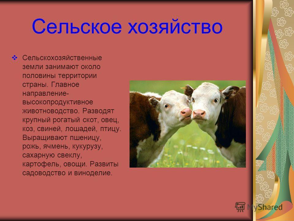 Сельское хозяйство Сельскохозяйственные земли занимают около половины территории страны. Главное направление- высокопродуктивное животноводство. Разводят крупный рогатый скот, овец, коз, свиней, лошадей, птицу. Выращивают пшеницу, рожь, ячмень, кукур