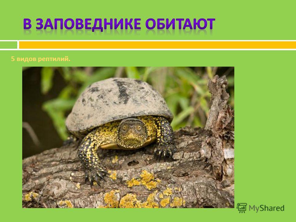 5 видов рептилий.