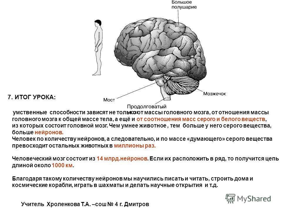 7. ИТОГ УРОКА: умственные способности зависят не только от массы головного мозга, от отношения массы головного мозга к общей массе тела, а ещё и от соотношения масс серого и белого веществ, из которых состоит головной мозг. Чем умнее животное, тем бо