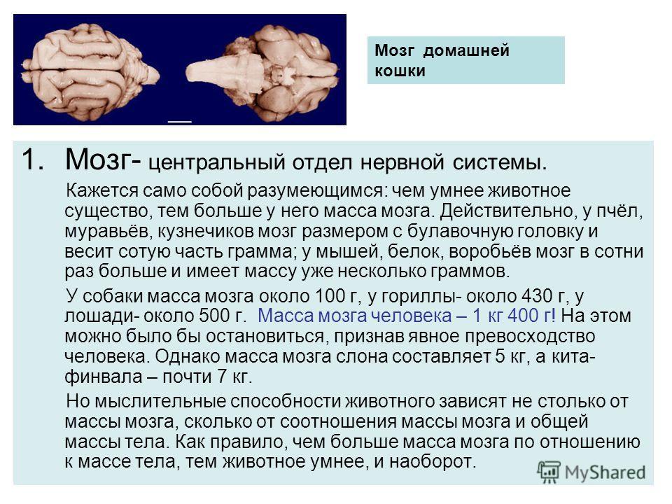 1.Мозг- центральный отдел нервной системы. Кажется само собой разумеющимся: чем умнее животное существо, тем больше у него масса мозга. Действительно, у пчёл, муравьёв, кузнечиков мозг размером с булавочную головку и весит сотую часть грамма; у мышей