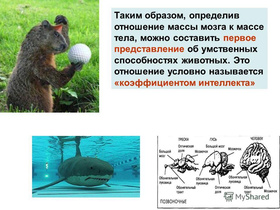 Таким образом, определив отношение массы мозга к массе тела, можно составить первое представление об умственных способностях животных. Это отношение условно называется «коэффициентом интеллекта»