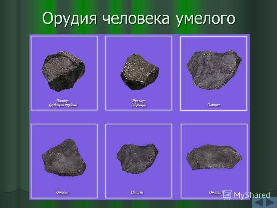 найдены останки первого человека в