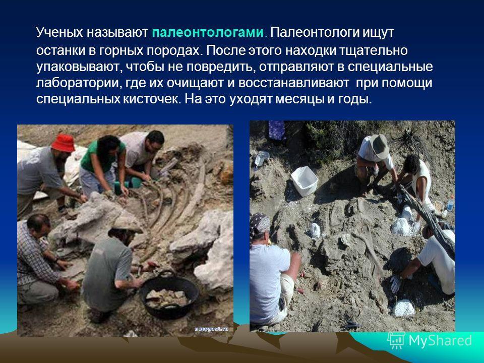Ученых называют палеонтологами. Палеонтологи ищут останки в горных породах. После этого находки тщательно упаковывают, чтобы не повредить, отправляют в специальные лаборатории, где их очищают и восстанавливают при помощи специальных кисточек. На это
