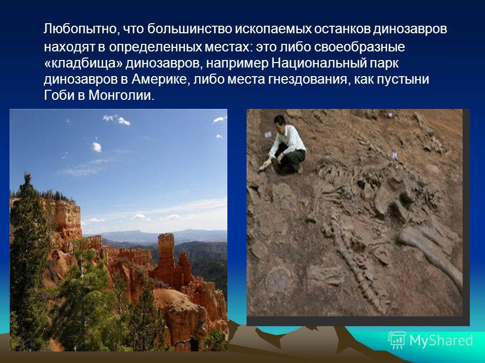 Любопытно, что большинство ископаемых останков динозавров находят в определенных местах: это либо своеобразные «кладбища» динозавров, например Национальный парк динозавров в Америке, либо места гнездования, как пустыни Гоби в Монголии.