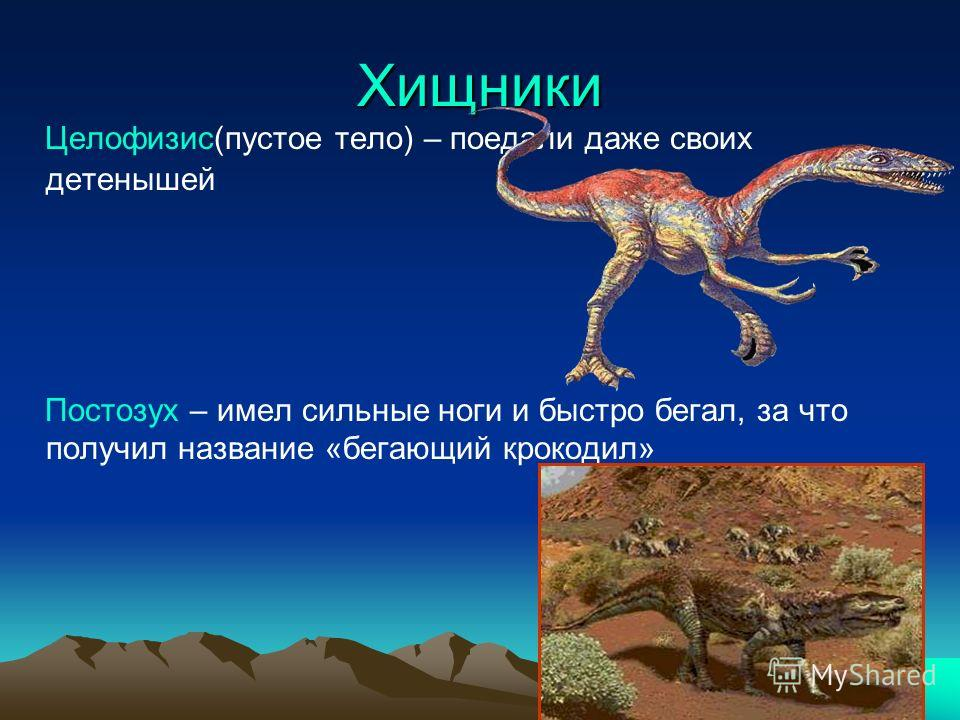 Хищники Целофизис(пустое тело) – поедали даже своих детенышей Постозух – имел сильные ноги и быстро бегал, за что получил название «бегающий крокодил»