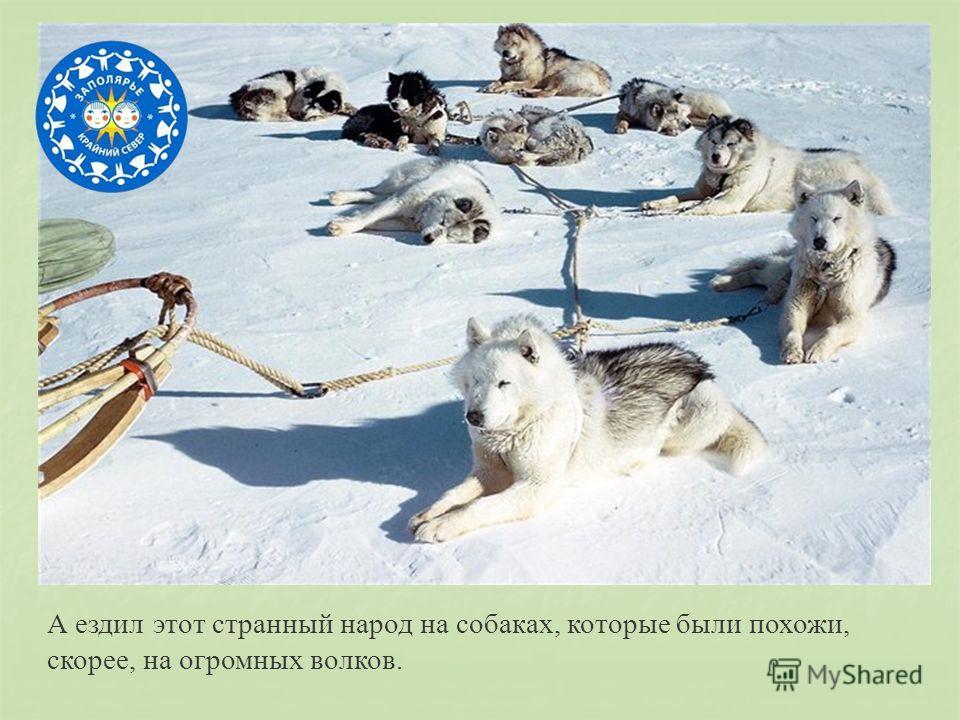 А ездил этот странный народ на собаках, которые были похожи, скорее, на огромных волков.