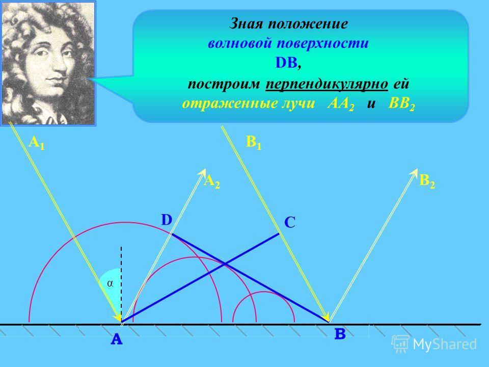 C α D В A А2А2 В2В2 Зная положение волновой поверхности DB, построим перпендикулярно ей отраженные лучи АА 2 и ВВ 2 А1А1 В1В1