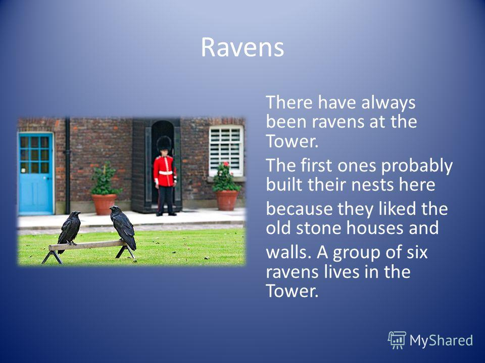 Ravens There have always been ravens at the Tower. The first ones probably built their nests here because they liked the old stone houses and walls. A group of six ravens lives in the Tower.