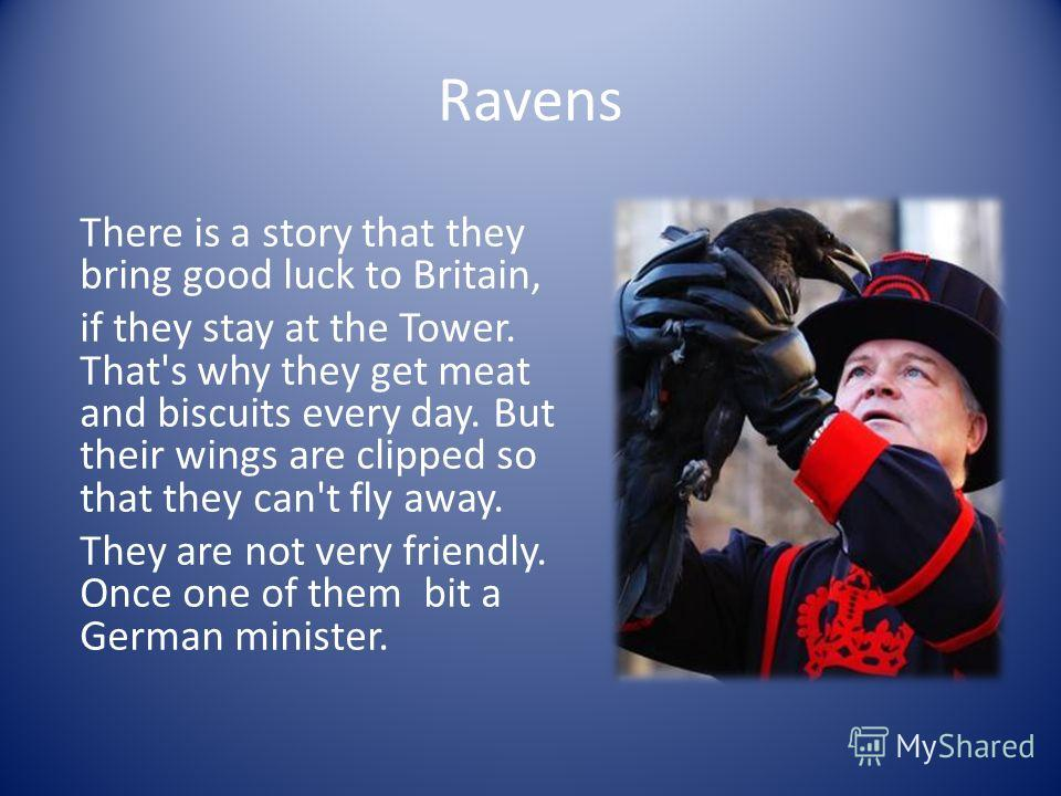Ravens There is a story that they bring good luck to Britain, if they stay at the Tower. That's why they get meat and biscuits every day. But their wings are clipped so that they can't fly away. They are not very friendly. Once one of them bit a Germ