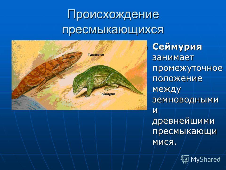 Происхождение пресмыкающихся Сеймурия занимает промежуточное положение между земноводными и древнейшими пресмыкающи мися. Сеймурия занимает промежуточное положение между земноводными и древнейшими пресмыкающи мися.