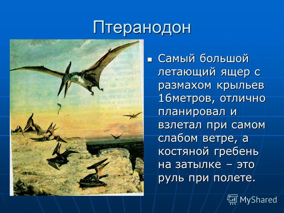 Птеранодон Самый большой летающий ящер с размахом крыльев 16метров, отлично планировал и взлетал при самом слабом ветре, а костяной гребень на затылке – это руль при полете. Самый большой летающий ящер с размахом крыльев 16метров, отлично планировал