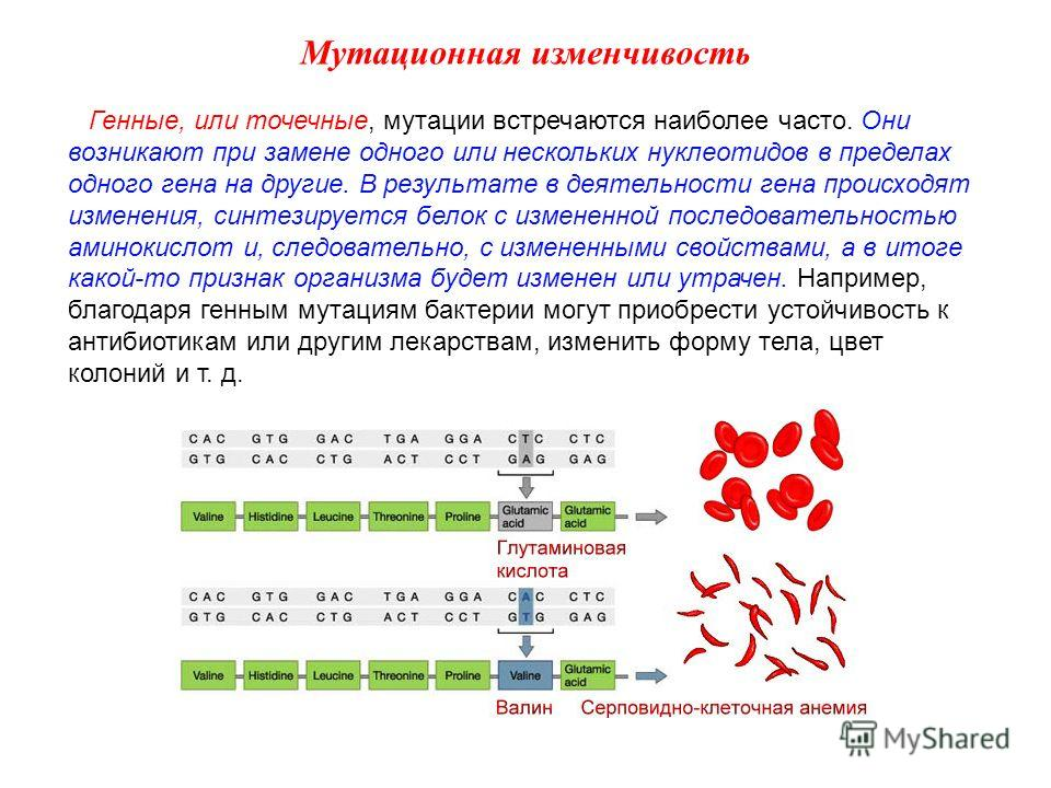 Генные, или точечные, мутации встречаются наиболее часто. Они возникают при замене одного или нескольких нуклеотидов в пределах одного гена на другие. В результате в деятельности гена происходят изменения, синтезируется белок с измененной последовате