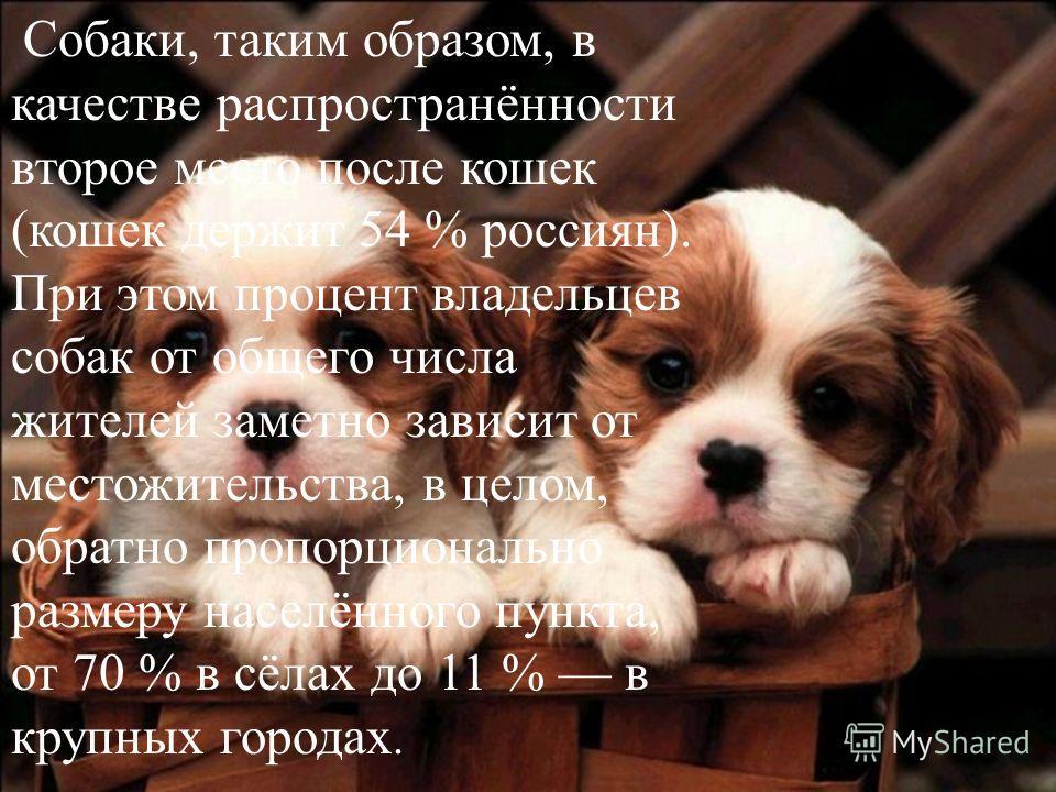 Собаки, таким образом, в качестве распространённости второе место после кошек (кошек держит 54 % россиян). При этом процент владельцев собак от общего числа жителей заметно зависит от местожительства, в целом, обратно пропорционально размеру населённ
