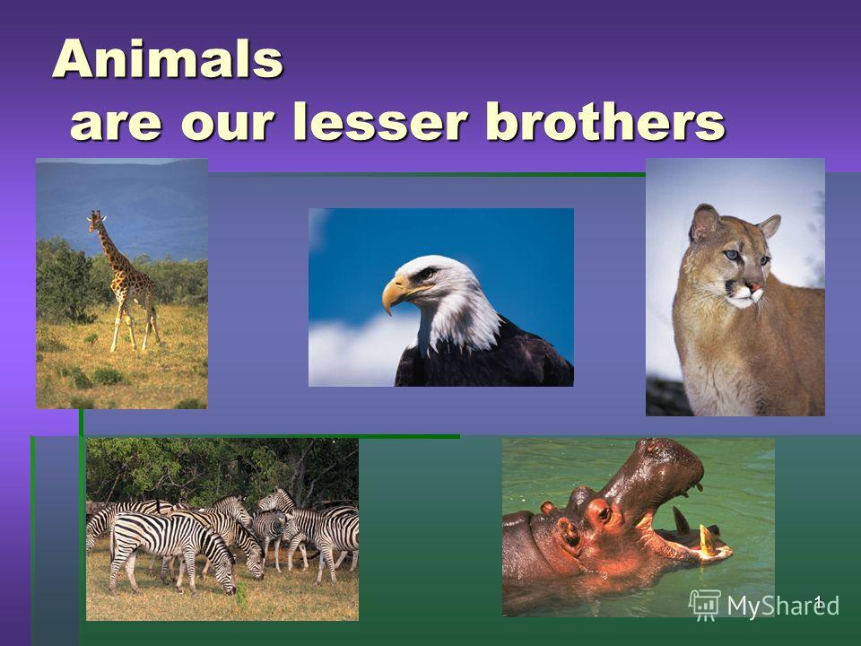 19.11.20131 Animals are our lesser brothers