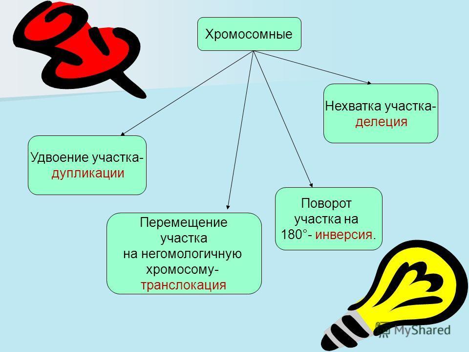 Хромосомные Удвоение участка- дупликации Перемещение участка на негомологичную хромосому- транслокация Поворот участка на 180°- инверсия. Нехватка участка- делеция