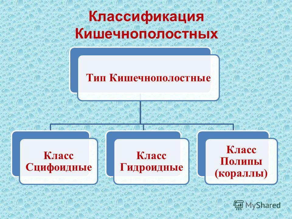 Классификация Кишечнополостных Тип Кишечнополостные Класс Сцифоидные Класс Гидроидные Класс Полипы (кораллы)