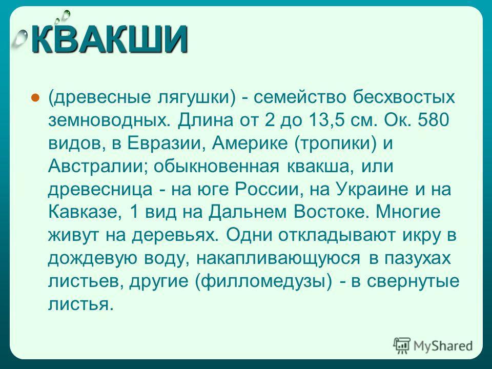 КВАКШИ (древесные лягушки) - семейство бесхвостых земноводных. Длина от 2 до 13,5 см. Ок. 580 видов, в Евразии, Америке (тропики) и Австралии; обыкновенная квакша, или древесница - на юге России, на Украине и на Кавказе, 1 вид на Дальнем Востоке. Мно
