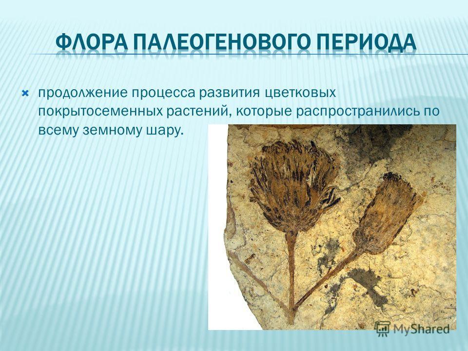 продолжение процесса развития цветковых покрытосеменных растений, которые распространились по всему земному шару.