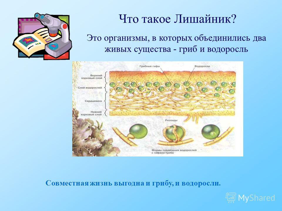 Что такое Лишайник? Это организмы, в которых объединились два живых существа - гриб и водоросль Совместная жизнь выгодна и грибу, и водоросли.