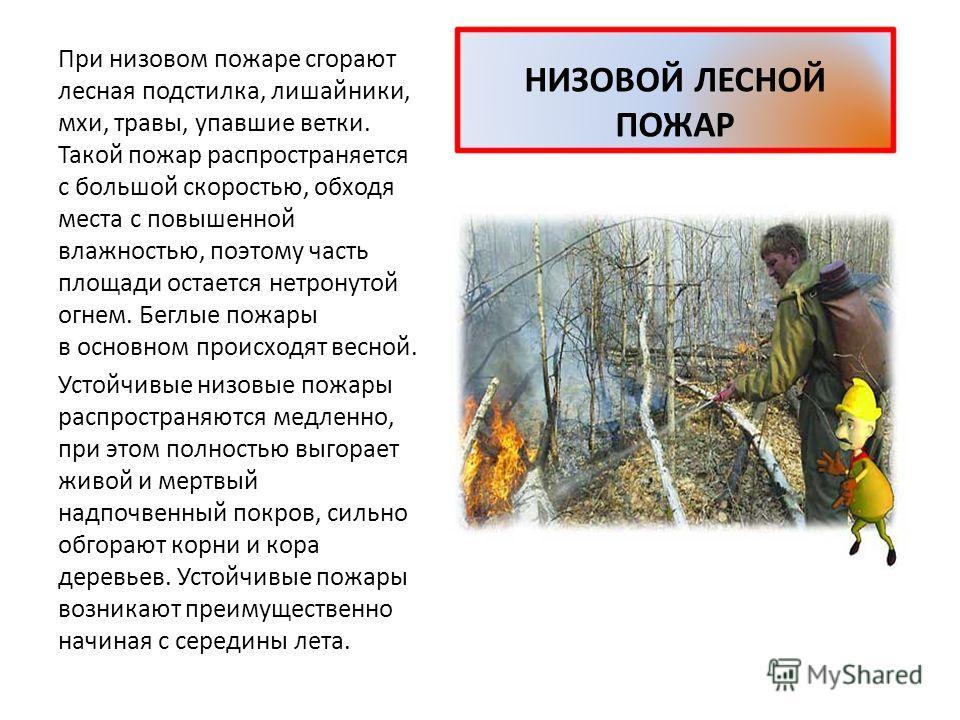 ЛЕСНОЙ ПОЖАР Большая часть лесных пожаров 84 процента возникает по вине человека. Брошенный тлеющий окурок, непогашенный костер могут стать причиной огромного бедствия для растительного и животного мира. Много лесных пожаров вспыхивает также из-за уд
