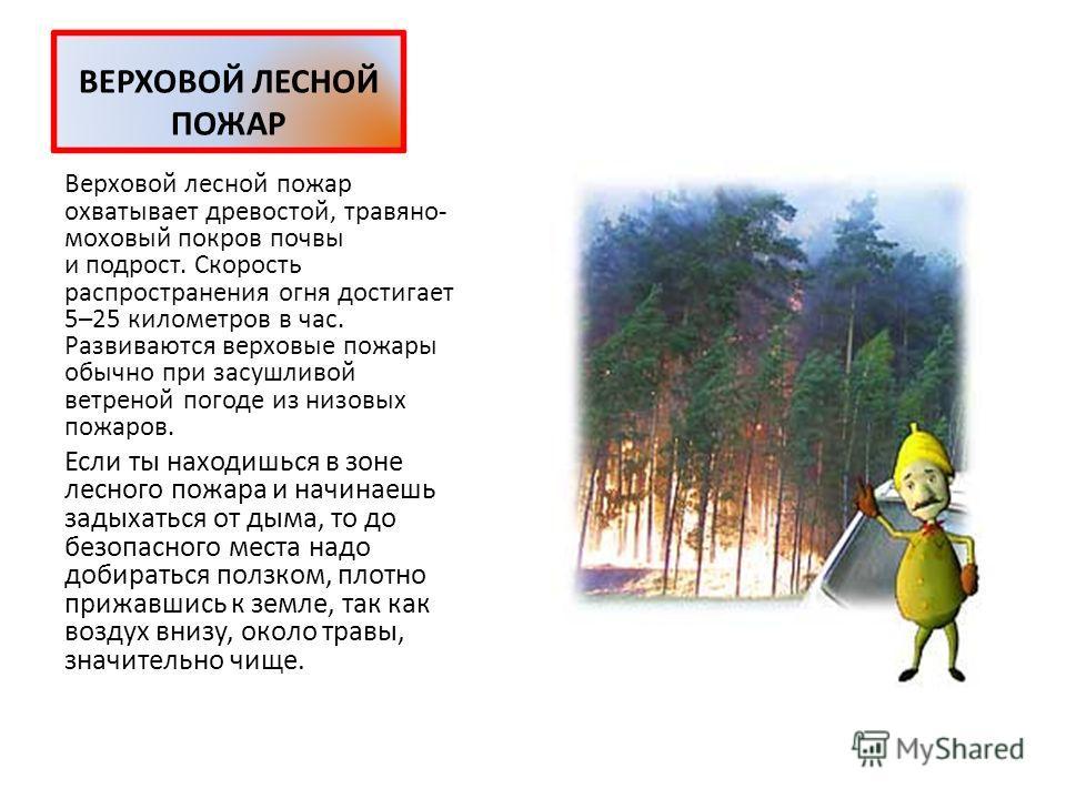 НИЗОВОЙ ЛЕСНОЙ ПОЖАР При низовом пожаре сгорают лесная подстилка, лишайники, мхи, травы, упавшие ветки. Такой пожар распространяется с большой скоростью, обходя места с повышенной влажностью, поэтому часть площади остается нетронутой огнем. Беглые по