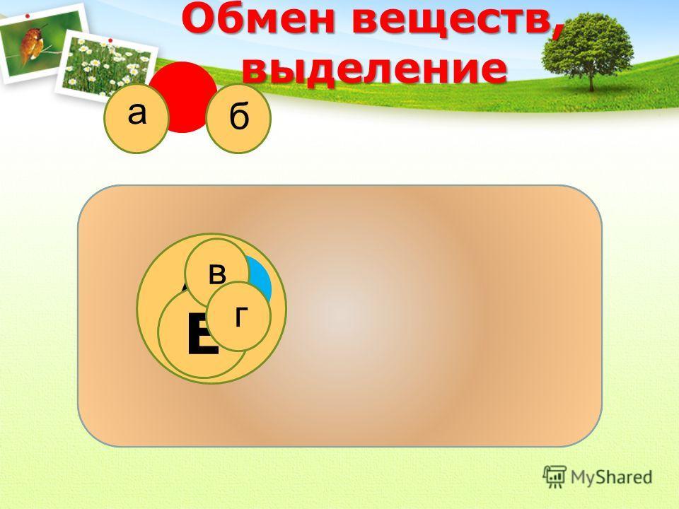 АБ Обмен веществ, выделение Е а б в г