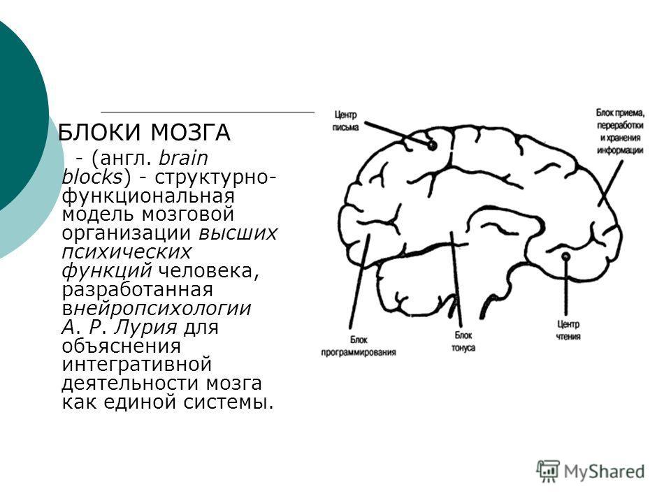 БЛОКИ МОЗГА - (англ. brain blocks) - структурно- функциональная модель мозговой организации высших психических функций человека, разработанная внейропсихологии А. Р. Лурия для объяснения интегративной деятельности мозга как единой системы.