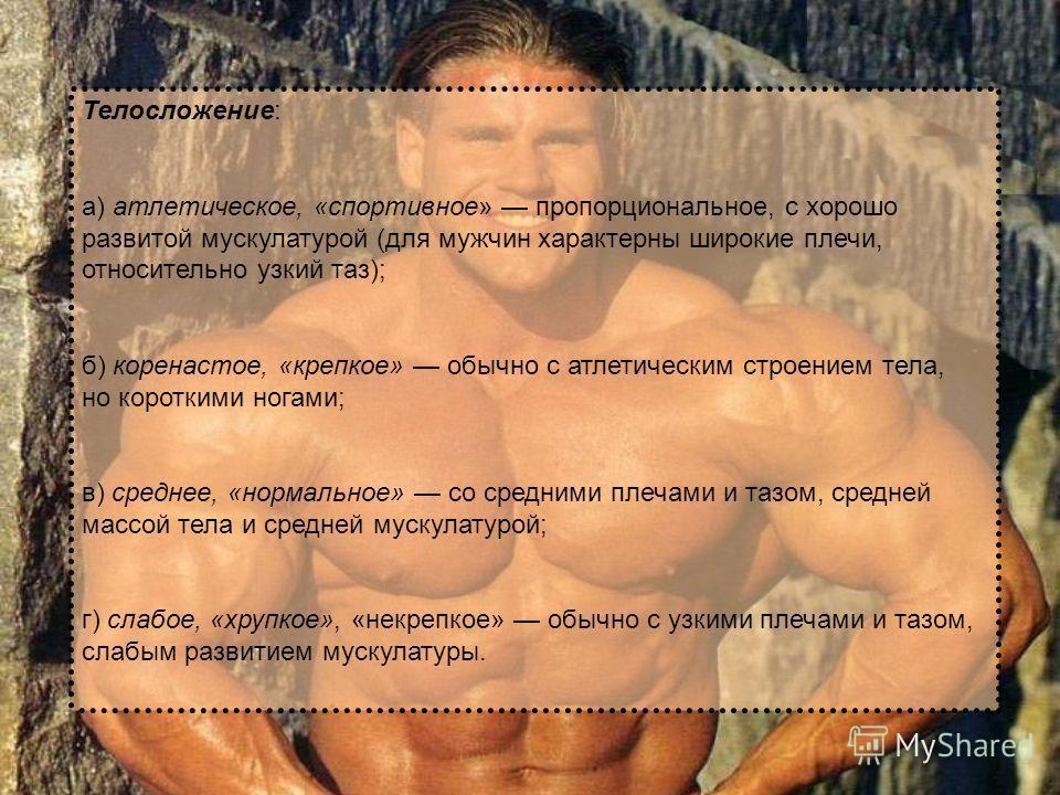 Телосложение: а) атлетическое, «спортивное» пропорциональное, с хорошо развитой мускулатурой (для мужчин характерны широкие плечи, относительно узкий таз); б) коренастое, «крепкое» обычно с атлетическим строением тела, но короткими ногами; в) среднее
