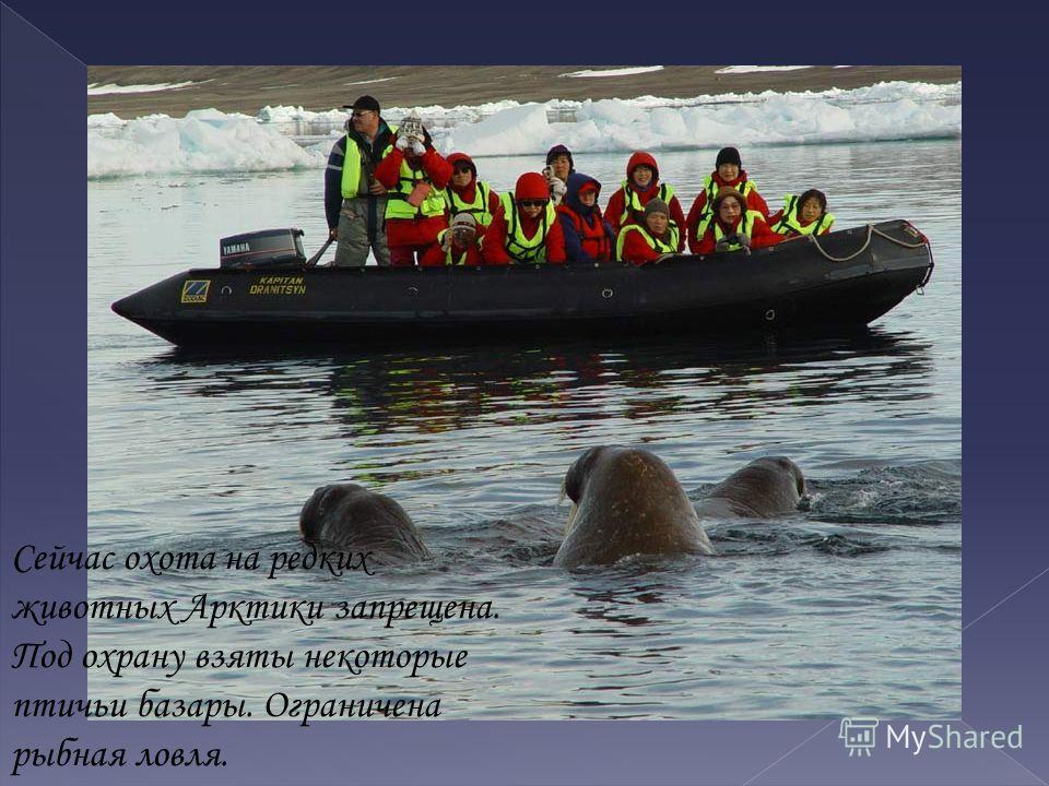 Сейчас охота на редких животных Арктики запрещена. Под охрану взяты некоторые птичьи базары. Ограничена рыбная ловля.