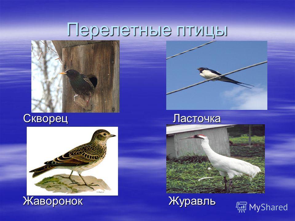 Перелетные птицы Скворец Ласточка Скворец Ласточка Жаворонок Журавль Жаворонок Журавль
