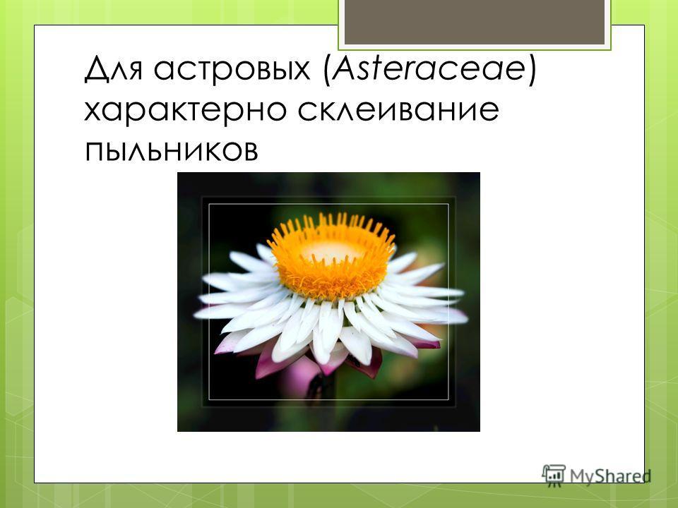 Для астровых (Asteraceae) характерно склеивание пыльников