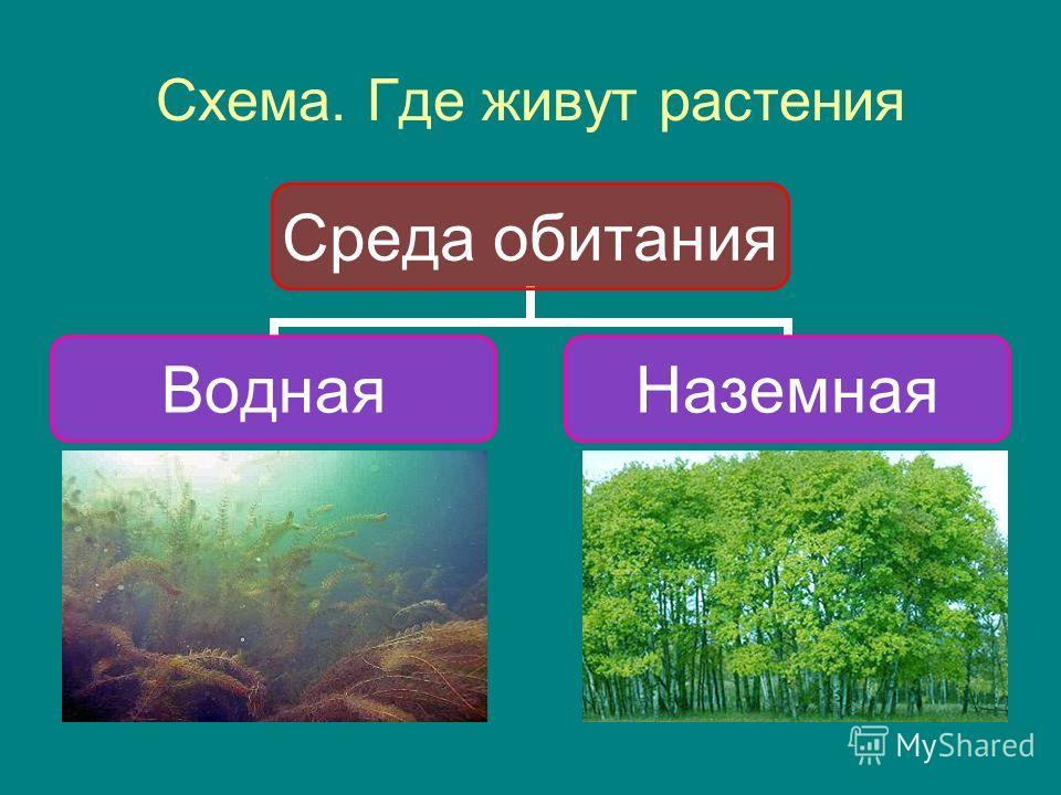 Схема. Где живут растения Среда обитания ВоднаяНаземная