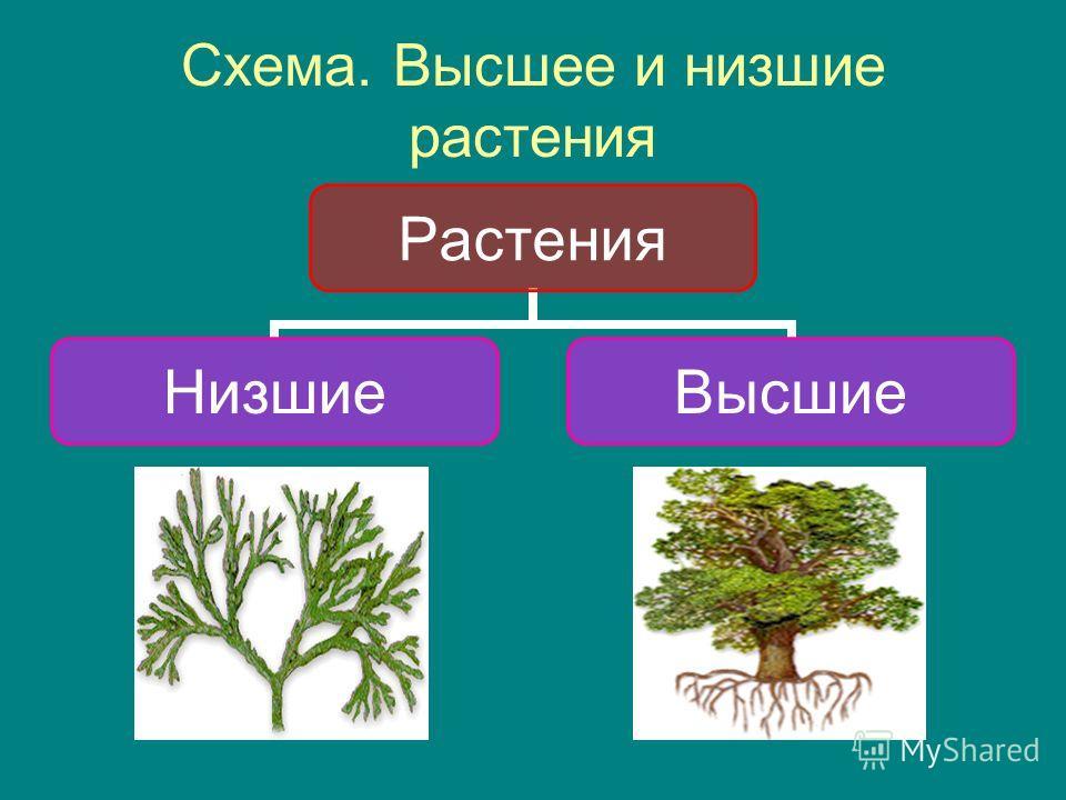 Схема. Высшее и низшие растения Растения НизшиеВысшие