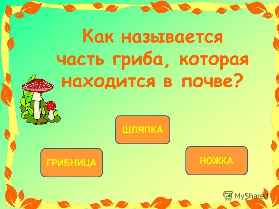 ГРИБНИЦА ШЛЯПКА НОЖКА Как называется часть гриба, которая находится в почве?