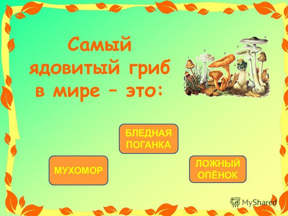 БЛЕДНАЯ ПОГАНКА МУХОМОР ЛОЖНЫЙ ОПЁНОК Самый ядовитый гриб в мире – это: