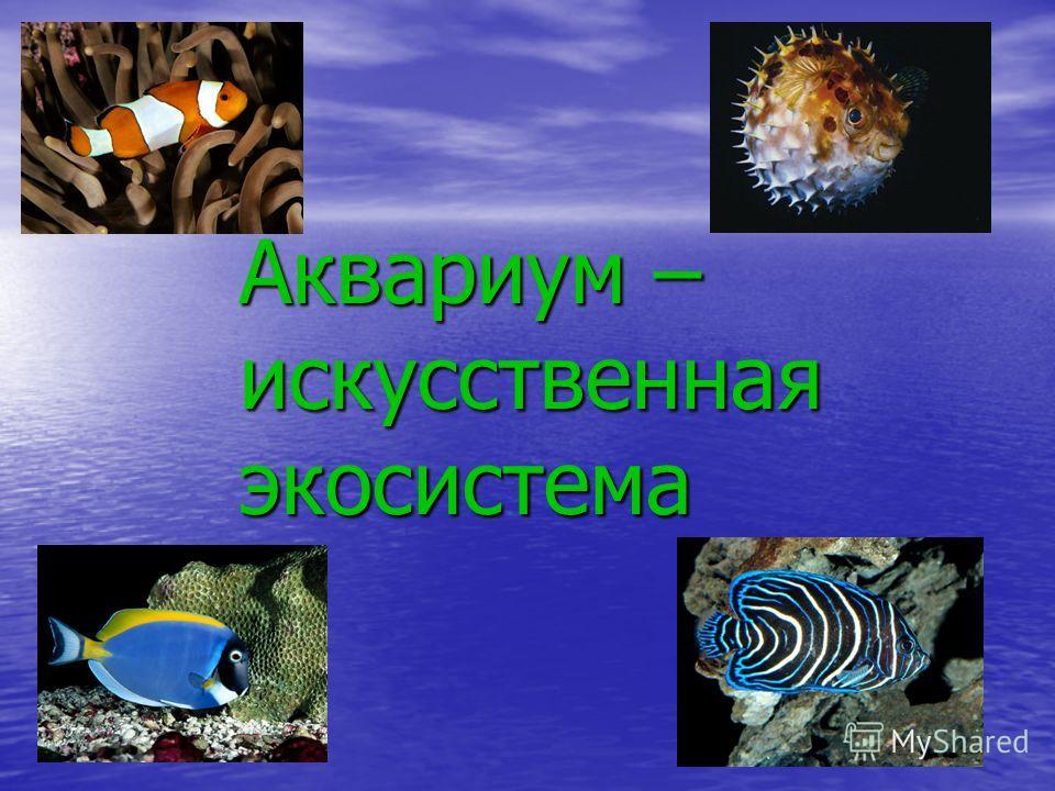 Аквариум – искусственная экосистема