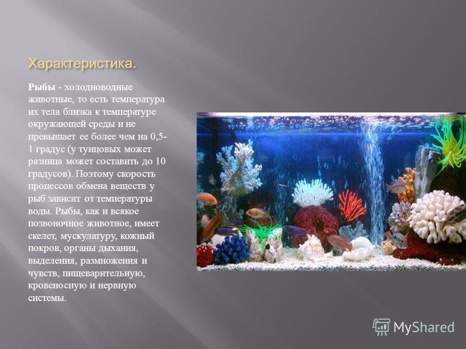 Характеристика. Рыбы - холодноводные животные, то есть температура их тела близка к температуре окружающей среды и не превышает ее более чем на 0,5- 1 градус ( у тунцовых может разница может составить до 10 градусов ). Поэтому скорость процессов обме