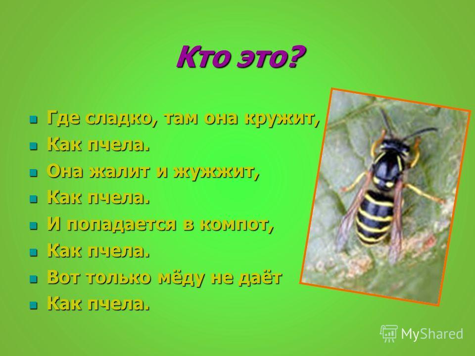 Кто это? Где сладко, там она кружит, Где сладко, там она кружит, Как пчела. Как пчела. Она жалит и жужжит, Она жалит и жужжит, Как пчела. Как пчела. И попадается в компот, И попадается в компот, Как пчела. Как пчела. Вот только мёду не даёт Вот тольк