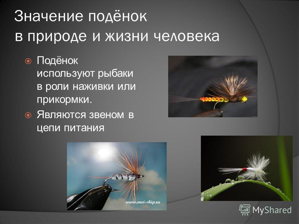 Значение подёнок в природе и жизни человека Подёнок используют рыбаки в роли наживки или прикормки. Являются звеном в цепи питания