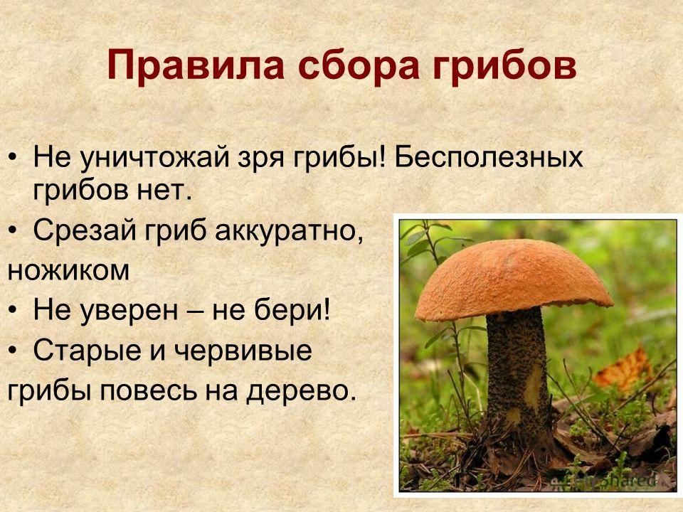 Правила сбора грибов Не уничтожай зря грибы! Бесполезных грибов нет. Срезай гриб аккуратно, ножиком Не уверен – не бери! Старые и червивые грибы повесь на дерево.