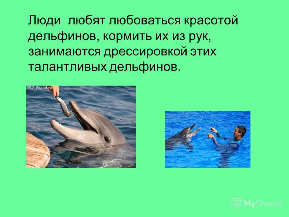Люди любят любоваться красотой дельфинов, кормить их из рук, занимаются дрессировкой этих талантливых дельфинов.