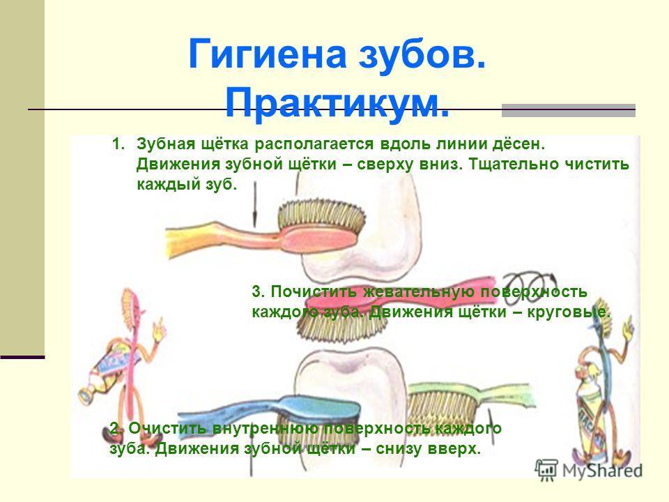 Гигиена зубов. Практикум. 1.Зубная щётка располагается вдоль линии дёсен. Движения зубной щётки – сверху вниз. Тщательно чистить каждый зуб. 2. Очистить внутреннюю поверхность каждого зуба. Движения зубной щётки – снизу вверх. 3. Почистить жевательну
