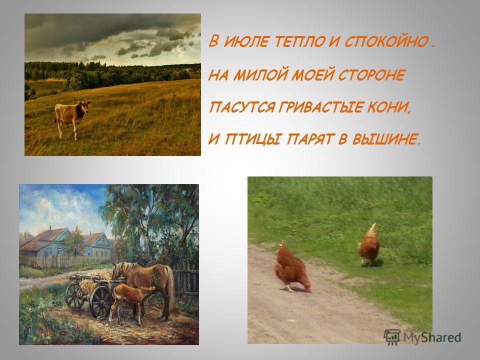 В ИЮЛЕ ТЕПЛО И СПОКОЙНО. НА МИЛОЙ МОЕЙ СТОРОНЕ ПАСУТСЯ ГРИВАСТЫЕ КОНИ, И ПТИЦЫ ПАРЯТ В ВЫШИНЕ.