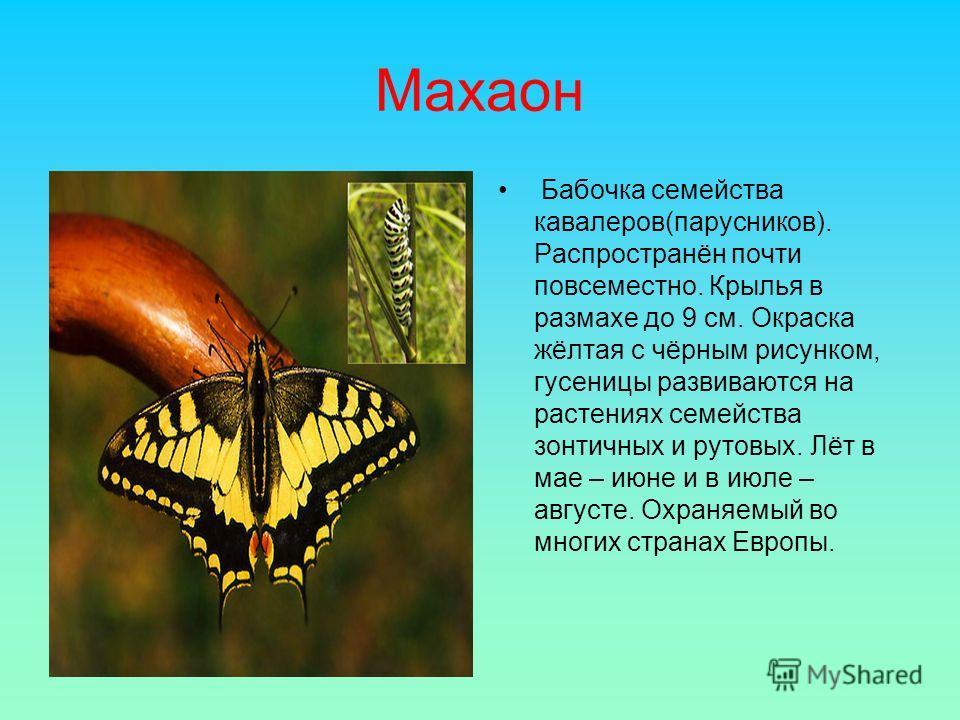 Махаон Бабочка семейства кавалеров(парусников). Распространён почти повсеместно. Крылья в размахе до 9 см. Окраска жёлтая с чёрным рисунком, гусеницы развиваются на растениях семейства зонтичных и рутовых. Лёт в мае – июне и в июле – августе. Охраняе